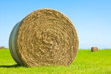 Harvest & Forage