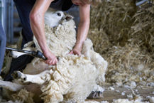 Shearing Products